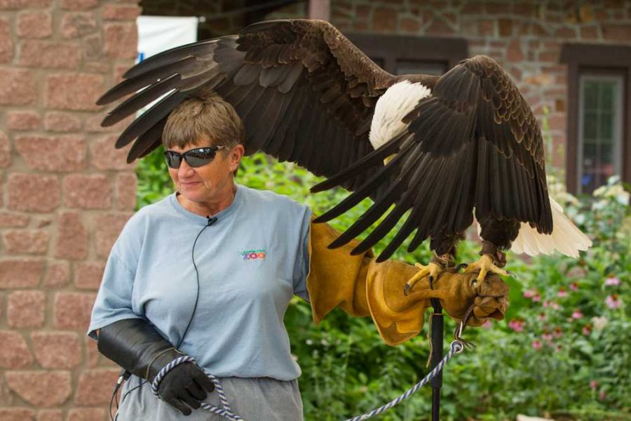 Sue+Schuble%2C+of+the+Dickerson+Park+Zoo%2C+holds+Phoenix+as+she+shows+off+her+wingspan.