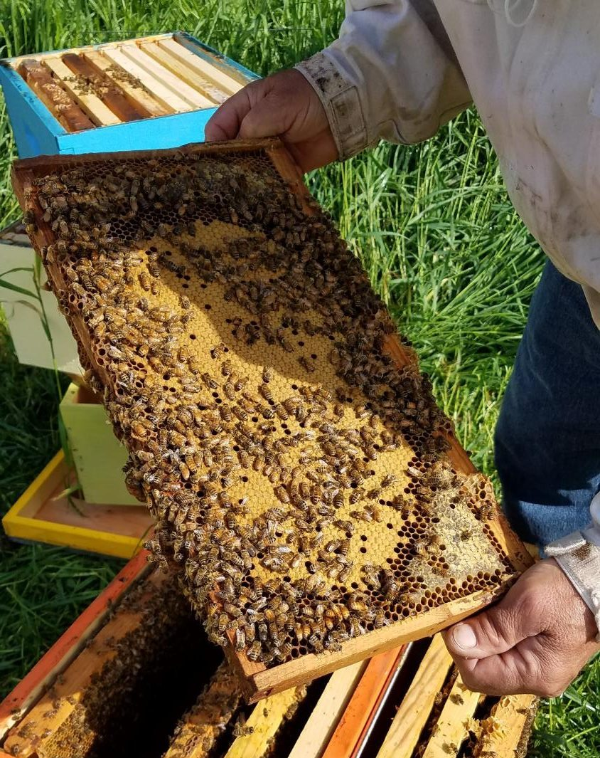 Heroes+to+Hives+Beekeeping+Course+Offered+at+UCM