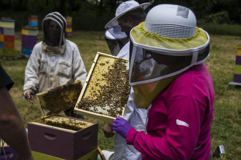 "Heroes to Hives is coming to Missouri. The program originally started in Michigan. The program founder Adam Ingrao said, ""I think the best part about all of this is just it"
